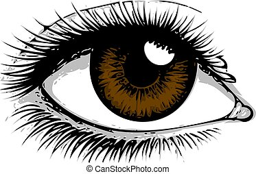 目, 女性の目, 人間, -, の上, バックグラウンド。, vector., 終わり, 白, art., logo., 目, eye.