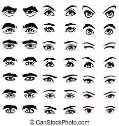 目, 眉毛