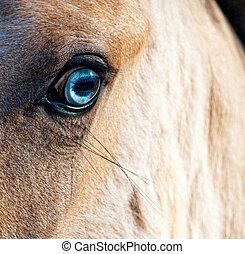目, 馬, 青