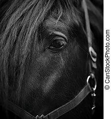 目, horse.
