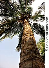 看, 棕櫚, 向上, 樹