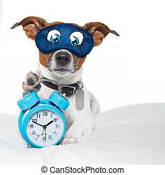 眠っている犬, 時計