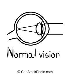 眼球, イラスト, 視力, 要素, ベクトル, web., 印。, 網, 株, 器官, シンボル