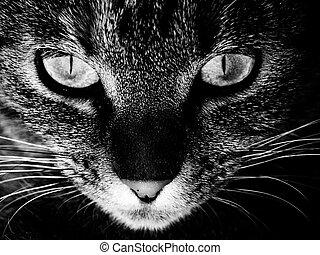 眼睛, ......的, a, 貓
