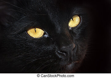 眼睛, ......的, a, 黑色的貓