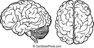矢量, 人類腦子