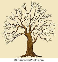 矢量, 樹