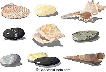 矢量, 海貝殼, 以及, 海, 卵石