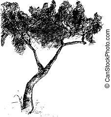 矢量, 畫, 樹。, 插圖, 手