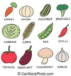 矢量, 集合, ......的, 蔬菜