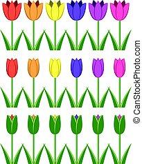 矢量, 集合, ......的, 鮮艷, 郁金香, 圖象, 摘要, 花, 符號
