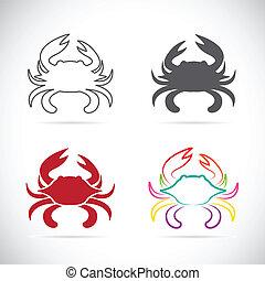 矢量, 集合, 螃蟹, 圖象