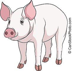 矢量, 顏色, 插圖, ......的, a, pig.