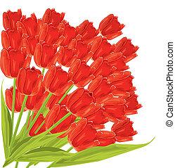 矢量, 鬱金香, 紅色, 插圖, 束