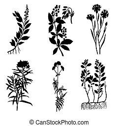 矢量, 黑色半面畫像, ......的, the, 藥品, 植物, 在懷特上, 背景