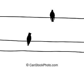 矢量, 黑色半面畫像, ......的, the, waxwings, 上, 電線