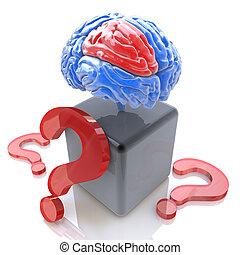 知性, 質問, 脳