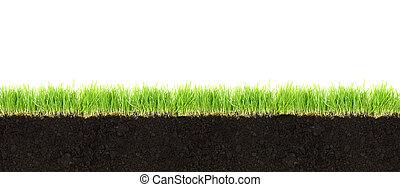 短剖面, ......的, 土壤, 以及, 草, 被隔离, 在懷特上, 背景