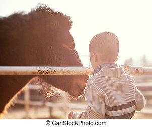 矮种马, 爱, 打击, 感情, 孩子