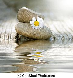 石头, 水, 平衡, 反映, 雏菊