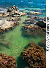 石头, 红, 环礁湖, 海, 海藻