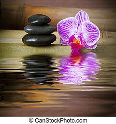 石头, spa, 竹子, 兰花