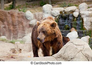 石頭, 布朗, 大的熊, 木頭, kamchatka