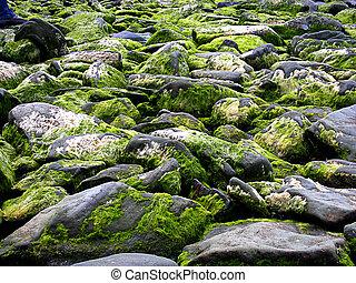 石, カバーされた, 浜, seeweeds