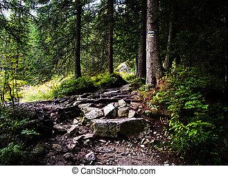 石, ハイキング小道, 森, によって, 行く