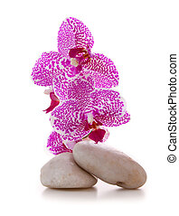 石, マッサージ, ピンク, orchid.