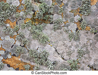 石, 古い, こけ, 壁, 手ざわり, 背景