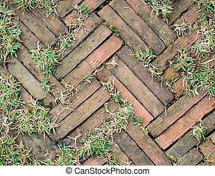 石, 庭, ∥間に∥, の上, 通り道, 成長する, れんが, 草, 赤, のまわり