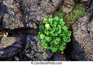 石, 植物, 緑, ∥間に∥