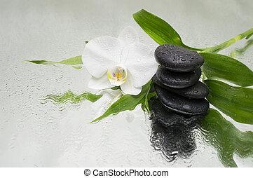 石, -, 水, 黒い背景, エステ, 竹, ラン