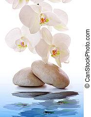 石, 白, マッサージ, orchid.