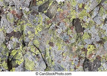 石, 自然, 背景, 手ざわり, 緑, こけ