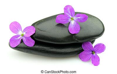 石, 花, すみれ