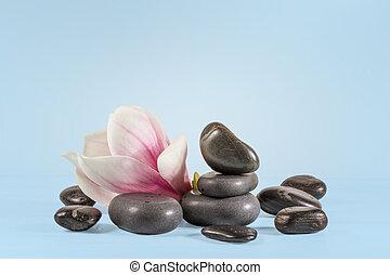石, 青, モクレン, 禅, 背景, 花