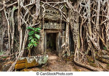 石, angkor, ドア, 木, prohm, 古代, camb, 寺院, 定着する, ta