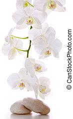 石, orchid., マッサージ