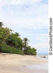 砂ビーチ, 木, montezuma
