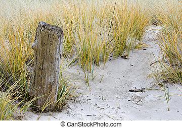 砂丘, 流木, 草