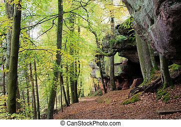 砂岩, 森林