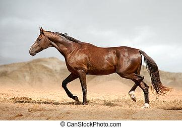 砂漠, 馬, 動くこと, 湾