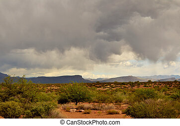 砂漠, sonora, アリゾナ