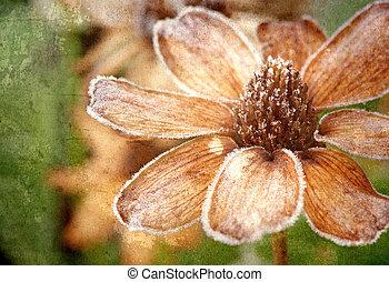 砂糖をまぶされた, flower., textured