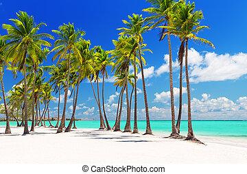 砂, やし, 白, 木, ココナッツ, 浜
