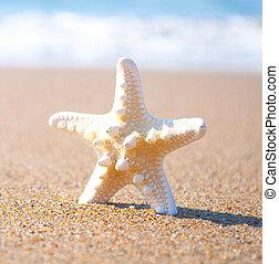 砂, 殻, 星, 白, 海