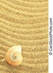 砂, 殻, 腹足類動物