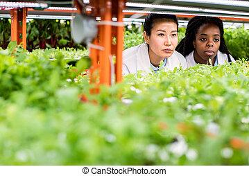 研究者, multicultural, 見る, 女性, 実生植物, 棚, グループ